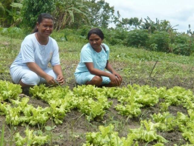 Haborus Maudemo vegetable plot
