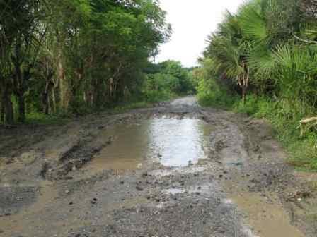 road-to-suai