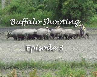 Buffalo Shooting