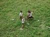 boys-from-canossa-amo